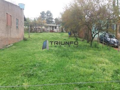 Terreno - Te00038 - 33334996