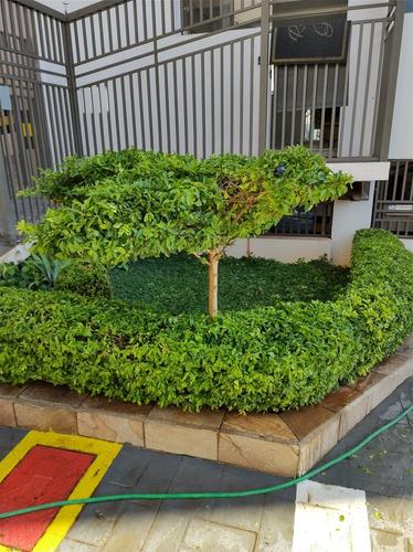 Poda De Árvore E Paisagísmo
