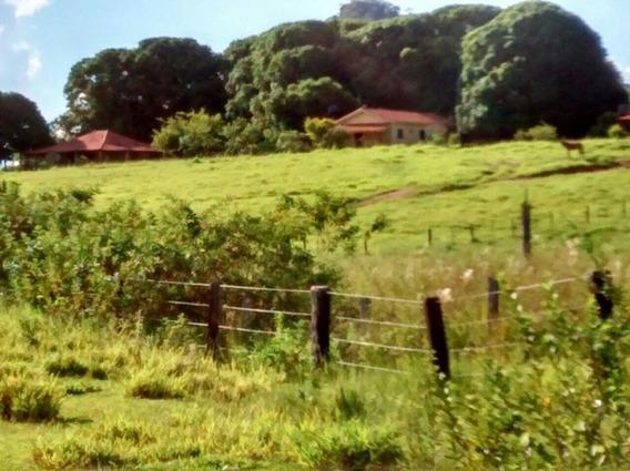 Fazenda A Venda Em Camapuã - Ms (pecuária) - 840