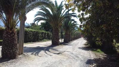 Camino Santo Toribio, Peñaflor