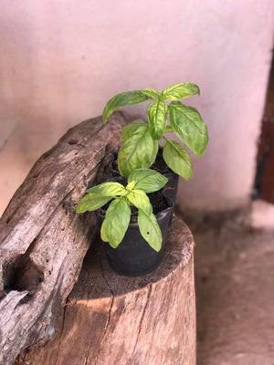 Plantas Y Plantines De Huerto