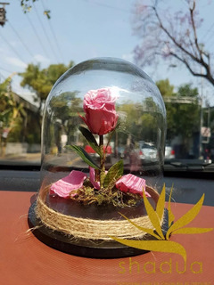 Rosa Eterna De 15 Cm Sin Placa