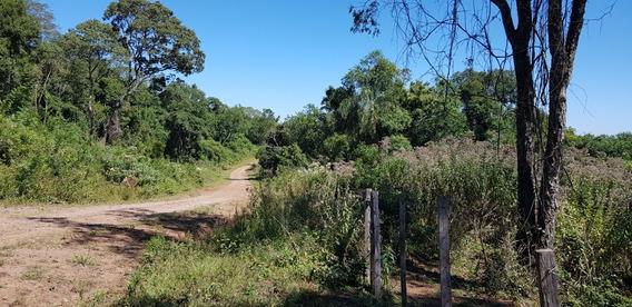Venta Chacra Monte Y Vertientes!. Misiones. 6km Asfalto