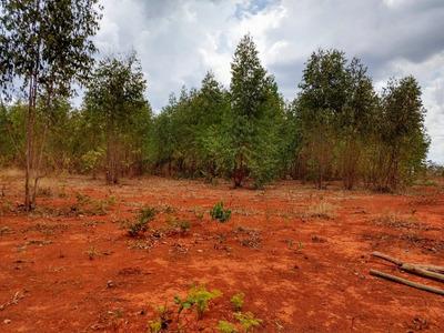 Sítio Em Abaeté Mg , 231 Klm De Belo Horizonte , Com 40 Ha, Com Eucalipto Plantado. - 4380