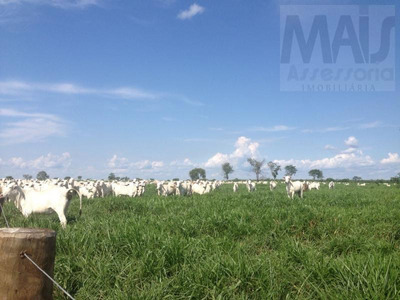 Fazenda Para Venda Em Santa Rita Do Tocantins - Cvf002