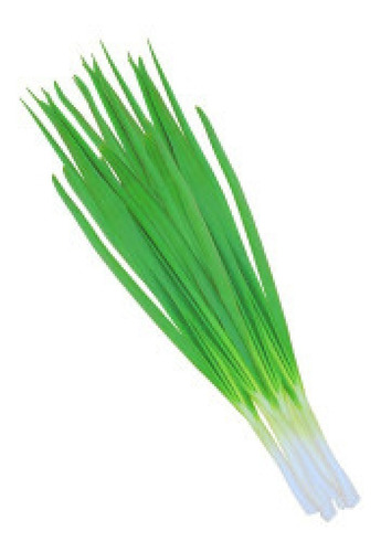 Sementes De Cebolinha Verde                     400 Sementes