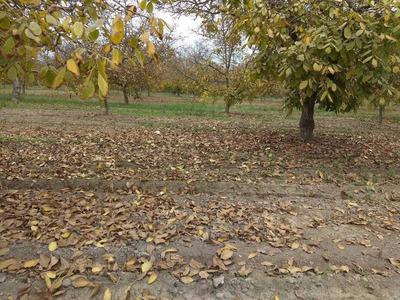 Atractivo Terreno Con Plantacion De Nogales En Plena Localidad De Paine En Exclusiva Vende Landtown Gestion Inmobiliaria