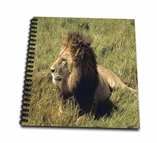 Florene Animales León Macho Africano Libro De Dibujo