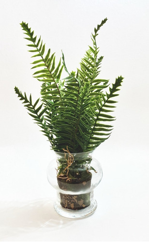 Imagen 1 de 5 de Planta Artificial Kokedama Helecho Con Maceta Cristal 37cm