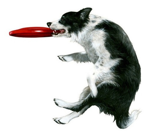 Juguete Frisbee Pequeño Para Mascotas Ø18cm