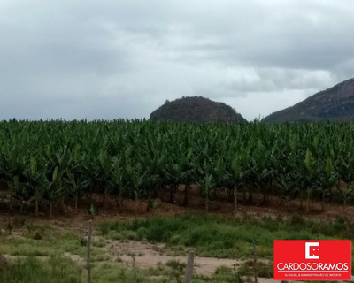 Fazenda - Fa00004 - 31916003