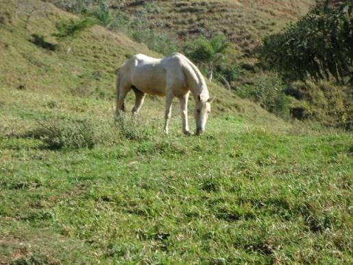Fazenda À Venda, 60 M² Por R$ 1.300.000 - Santa Lucrécia - Lorena/sp - Fa0001