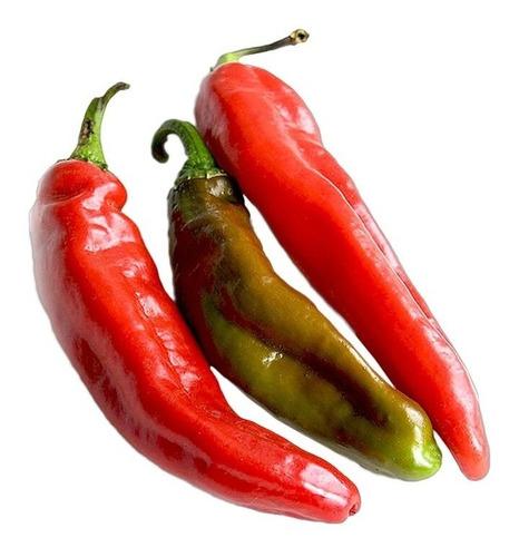 Imagen 1 de 8 de 50 Semillas Chile Anaheim Pepper Importadas Nuevas Germinan