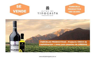Altos De Tinogasta - Parcelas Productivas De Vino