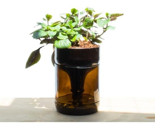Dolar Negro Little Plant 22, Maceta Autorregante