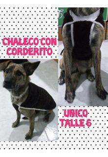 Chaleco Con Corderito Unico Talle 6 Para Perros Medianos