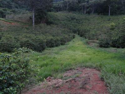 Fazendinha Com 78 Ha No Sul De Minas , Com Café Orgânico Carmo De Minas, Mg. Boa De Água... - 2963