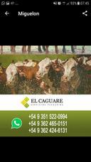 Consignatario De Hacienda Y Desarrollo De Campos En El Norte