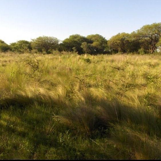 Campo Ganadero 15.650 Hectareas.