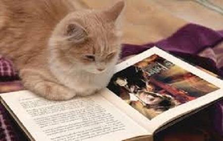 20 Livros De Literatura Estrangeiraa