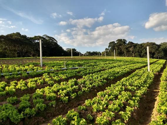 Chegue E Construa Sua Casa De Campo 600 M2 Com Area Verde J