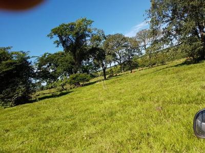 Fazenda A Venda Em Três Lagoas Ms (pecuária) - 991