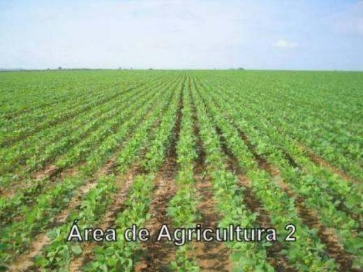 Venda Fazenda Em Araguatins- 013