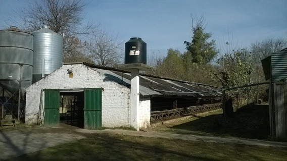 Cabaña Avicola En Marcos Paz Produccion Posible 24 Cajones
