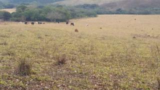 Fazenda Pasto Da Boiada