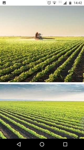 Campo Agrícola A La Venta 204 Hectáreas
