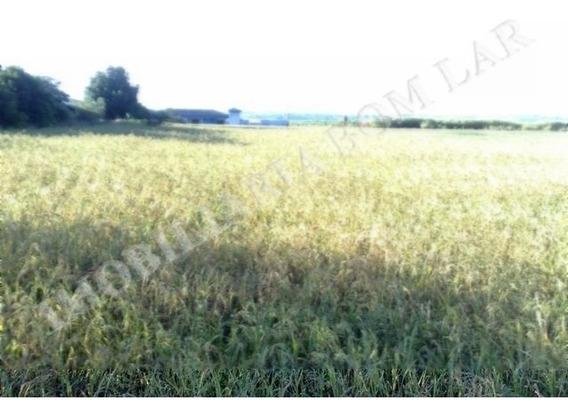 Terreno - Venda - Limeira X Arthur Nogueira - Cod. 3035 - V3035