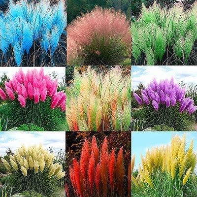 400 Sementes Mix Capim Dos Pampas+100 Orquídea Sapatinho Mix