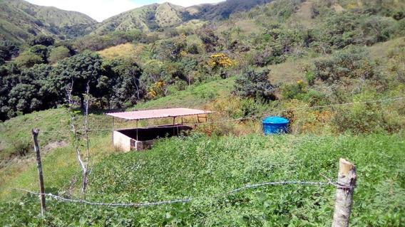 Finca En Venta En San Juan De Los Morros 04243341848