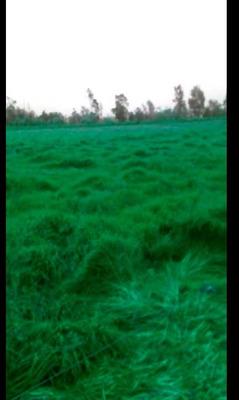 Finca Agroindustrial En Sesquilé En Venta