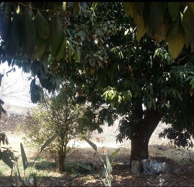 Terreno 492 M2 En Esquina, Algunos Árboles Frutales, Bardas