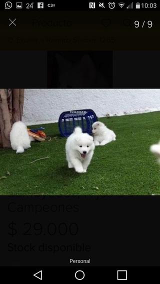 Samoyedos