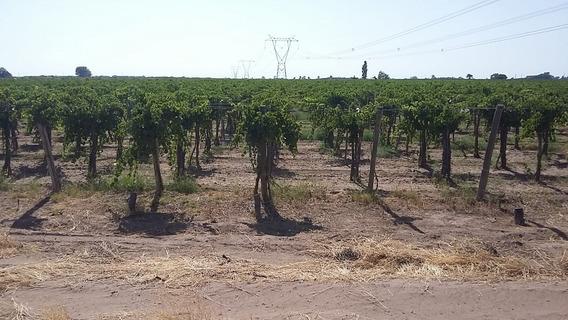 Vendo Finca 12.2 Has. Con Cosecha 2020, San Martin, Mendoza
