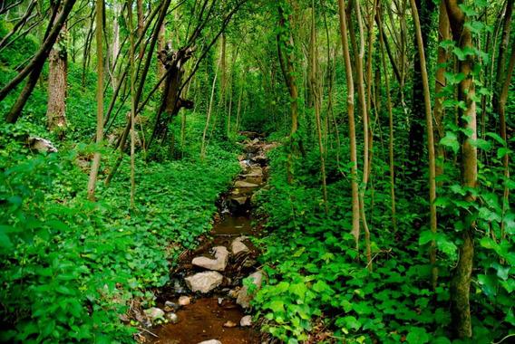 5 Hectáreas Únicas Forestadas En La Cumbre Cruz Chica