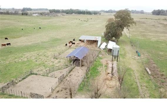 Campo Equipado 42 Ha. Villars Las Heras