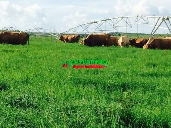 Fazenda Excelente No Sul Do Pará - 985