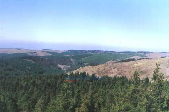 Campo Forestado A 8kms De La Cumbrecita - 186.000m2!!!!