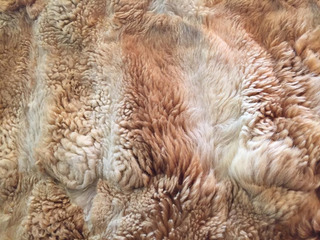Colcha De Vicuña 1,70 X 1,30m