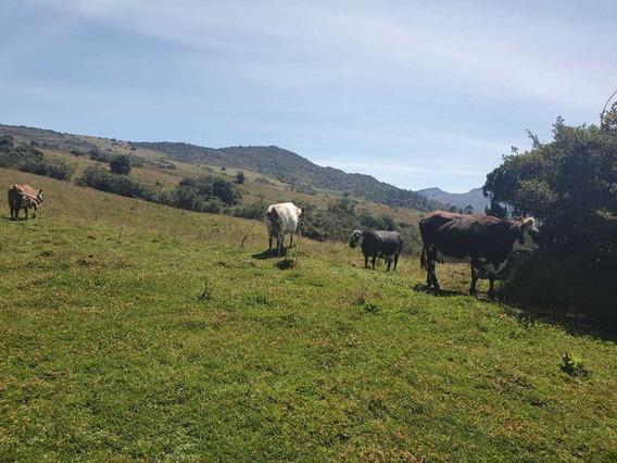 Finca En Venta Usme Rural - Vereda Pedregal