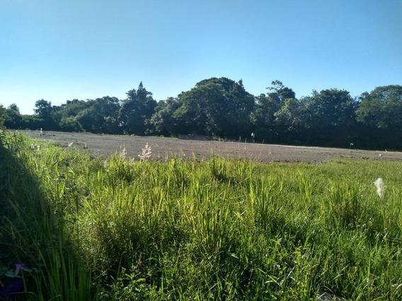 Terreno Em Estância Velha, Canoas/rs De 0m² Para Locação R$ 10.000,00/mes - Te356470