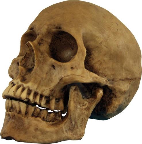 Imagen 1 de 1 de Decorativo Cráneo De Resina Resin Cranium Halloween