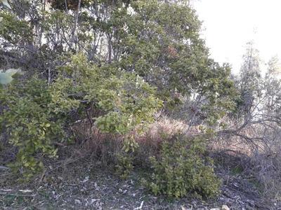 Parcelas En Parque Ecológico Laguna Verde