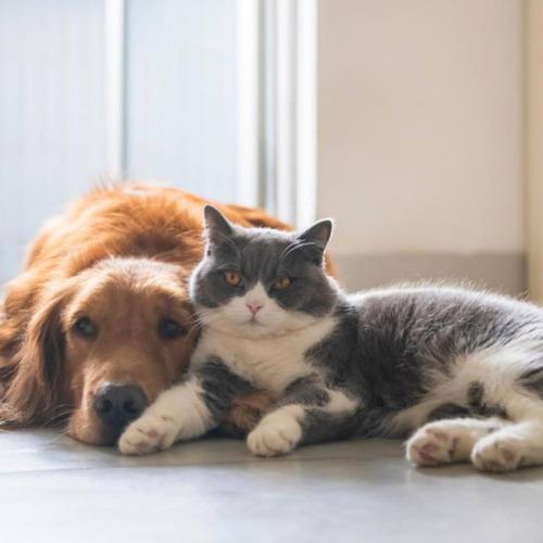 Imagem 1 de 6 de Táxi Dog/cat Para Seus Pets E Viagens No Geral