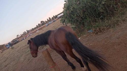 Imagem 1 de 4 de Vendo Cavalo 7.000  Ou Troco Por Carro