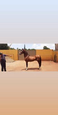 Vende - Se Cavalo