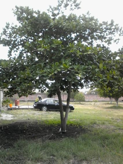 Terreno En Yautepec Morelos